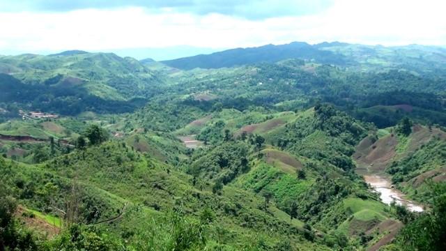 VPUB - Tuần Giáo nỗ lực vì mục tiêu phát triển Lâm nghiệp bền vững
